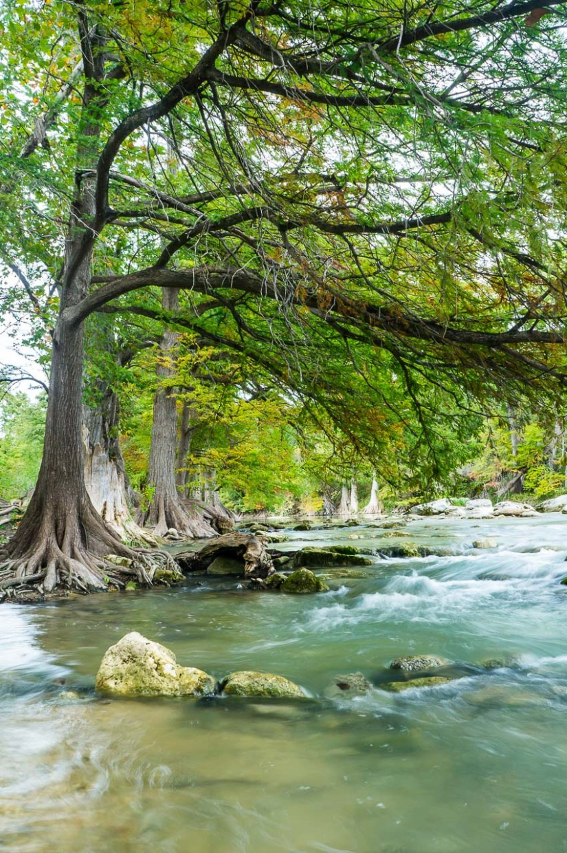 A River Under Bald Cypress Trees | Texas